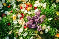 Lilac bloemen op het gras met bloemblaadjes Stock Foto's