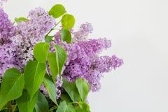 Lilac bloemen over witte achtergrond Stock Afbeelding