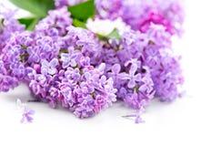 Lilac bloemen over witte houten achtergrond stock afbeeldingen