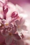 Lilac bloemen van de waterverf Stock Afbeeldingen