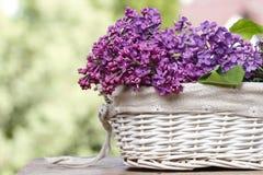 Lilac bloemen in witte rieten mand Royalty-vrije Stock Foto's