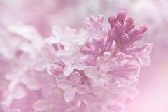 Lilac bloemenachtergrond. Stock Fotografie