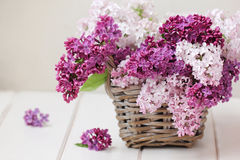 Lilac bloemenboeket Royalty-vrije Stock Afbeelding