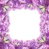 Lilac bloemenkader Stock Afbeeldingen