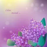 Lilac blooming flower. S. Vector EPS10 format Stock Photography
