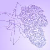 Lilac vector illustration