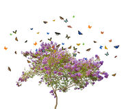 Lilac blooming tree and butterflies on white Stock Image