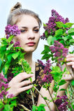 In lilac blossom Stock Image