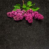 Lilac blossom branches on Antique Brown granite countertop Stock Images