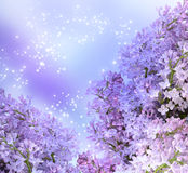 Lilac blossom Royalty Free Stock Photos