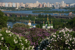 Lilac blossom in Kiev Stock Images