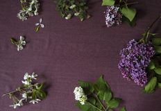 Lilac blossom on purple cloth with empty space for greeting message. Top view Royalty Free Stock Photo