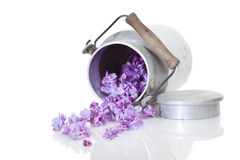 Lilac blossoms falling from old milk churn Stock Image