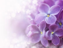 Lilac bokeh Royalty Free Stock Photography
