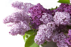 Lilac bouquet Stock Images