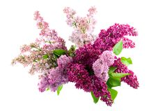 Lilac bouquet Royalty Free Stock Photos
