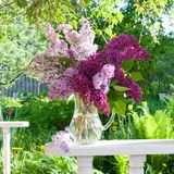 Lilac bouquet Stock Photography