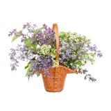 Lilac Bouquet Stock Images