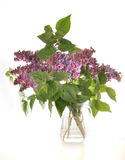 Lilac bouquet. The lilac bouquet costs in a vase on a table Stock Image