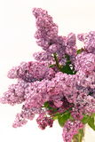 Lilac bouquet. In crystal vase on white background Stock Photo