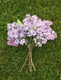 Lilac Bouquet. A bunch of springtime lilac blossoms laying on the grass royalty free stock image