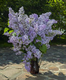 Lilac Bouquet Royalty Free Stock Images