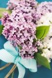 Lilac Royalty Free Stock Photos