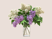 Lilac bouquet in a clear glass vase. On a bright background royalty free stock images