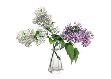 Lilac bouquet in a clear glass vase. On a white background royalty free stock photography