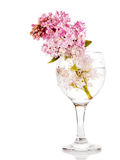 Lilac bouquet in a glass. Stock Photography