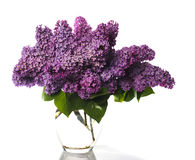 Lilac bouquet isolated on white Royalty Free Stock Photo