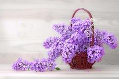 Lilac bouquet . Stock Photos