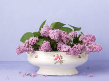 Lilac Bouquet on light violet background Royalty Free Stock Photography