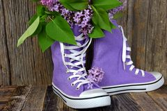 Lilac bouquet in purple sneakers Stock Photography