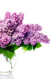 Lilac bouquet on white Royalty Free Stock Images