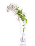 Lilac bouquets. Stock Photo