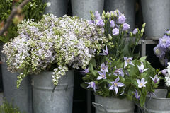 Lilac bouquets, bells  are in buckets Stock Image