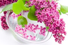 Lilac and a bowl of water Royalty Free Stock Photo