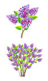 Lilac branch Royalty Free Stock Images