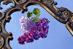 The lilac branch. The lilac branch lays on a smooth surface Stock Image