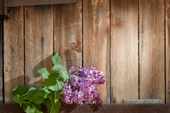 Lilac branch against the wooden background Stock Photo