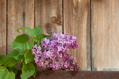 Lilac branch against the wooden background Stock Image