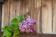 Lilac branch against the wooden background Royalty Free Stock Images