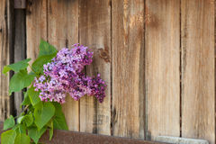Lilac branch against the wooden background Royalty Free Stock Photography