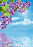 Lilac branch on a background of blue sky with clouds Stock Images