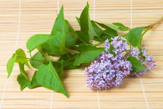 Lilac branch on bamboo Stock Images