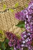 Lilac branch closeup Stock Image