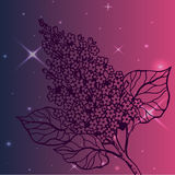 Lilac branch - detailed sketch Royalty Free Stock Photo