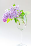 Lilac branch in a glass Stock Photography