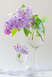 Lilac branch in a glass Stock Photo